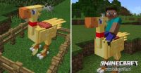 chococraft-mod-for-mcpe-2