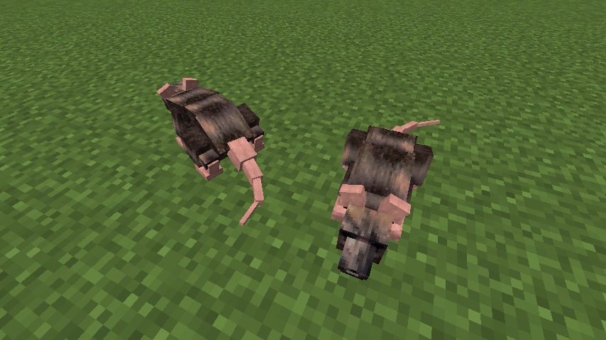 Animalium Mod 4